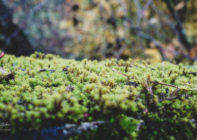 Herbstmoos